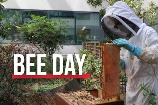 World Bee Day 2021